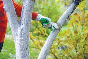 Заботы садовода в ноябре